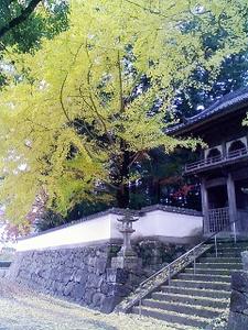禅寺と銀杏